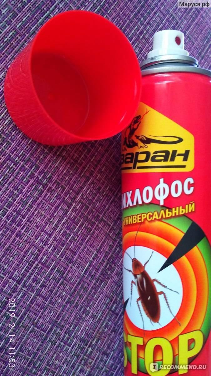 Дихлофос от клопов: как избавиться с его помощью от насекомых?