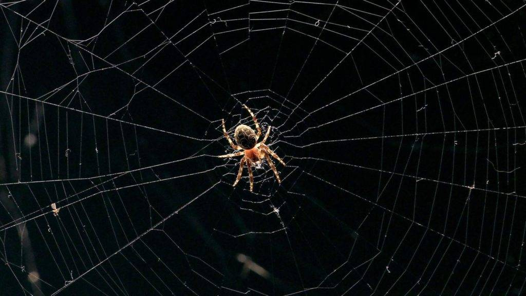Примета: паук в доме - мамин советник