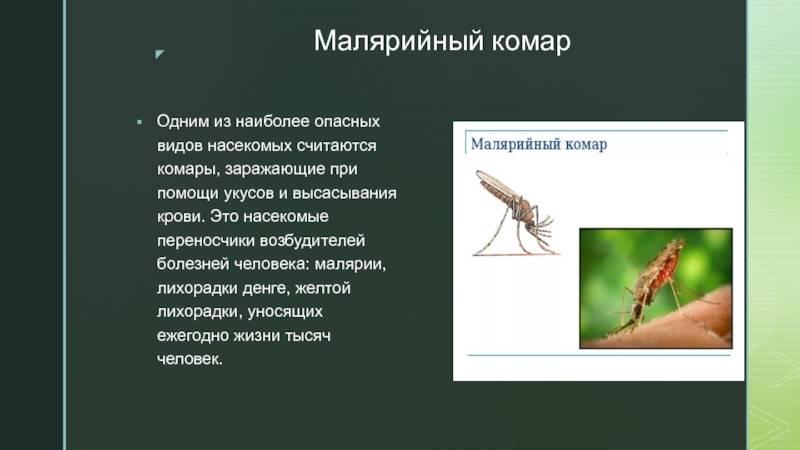 Малярийный комар – чем опасен для человека, фото как выглядит, цикл развития и чем питается малярийный комар?