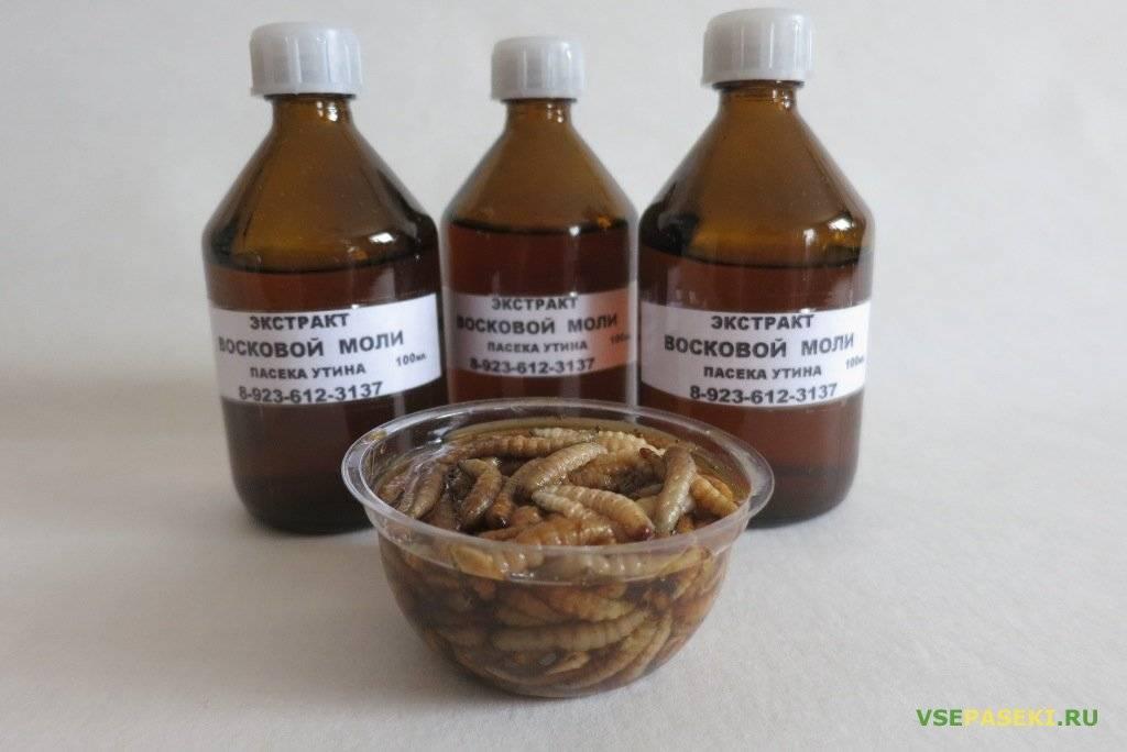 Настойка изпчелиной огневки (восковой моли): способ приготовления иправила применения