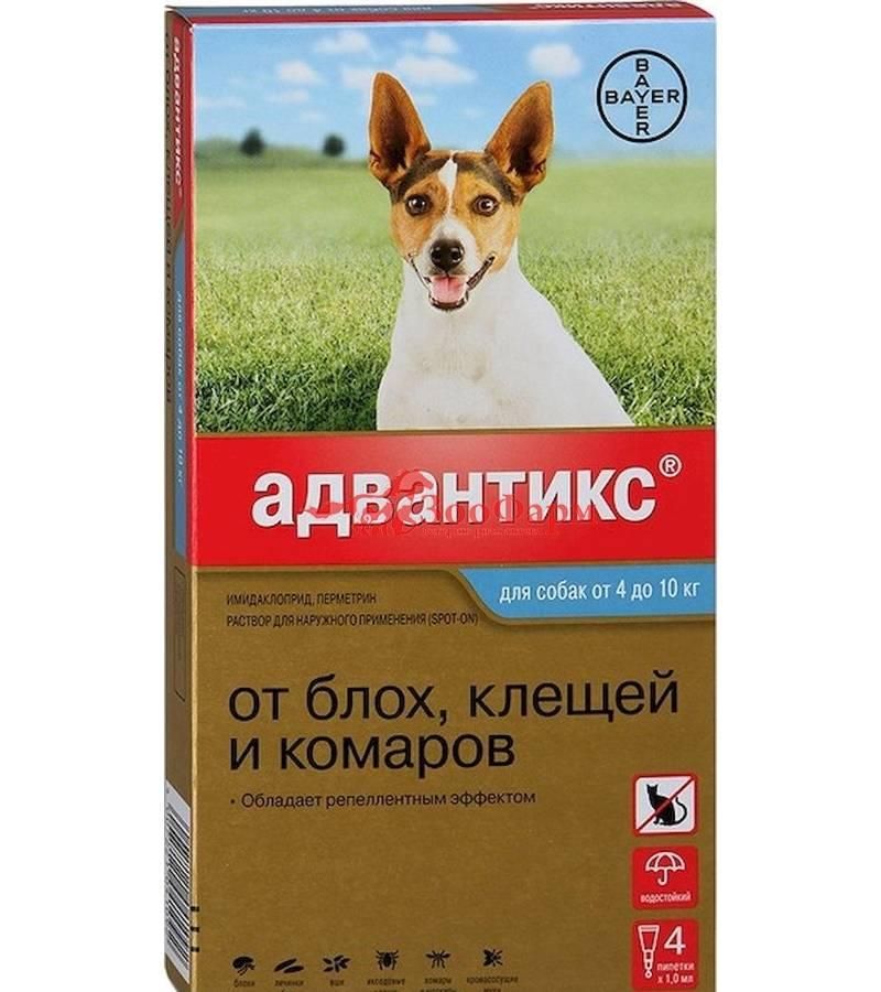 Aдвантикс для собак: инструкция по применению