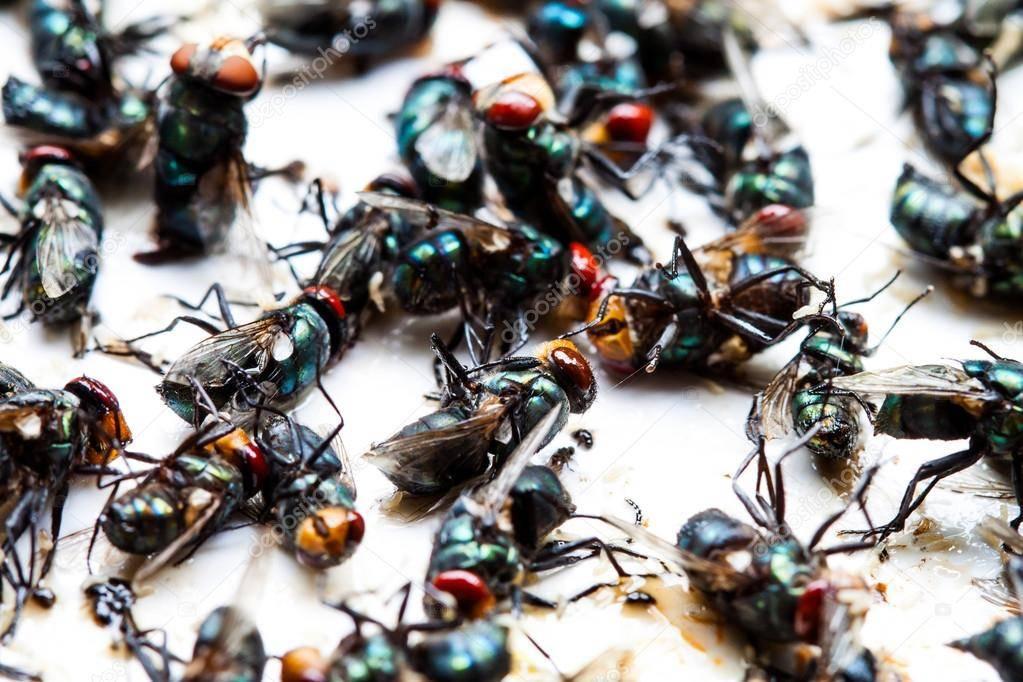Как поймать муху в квартире