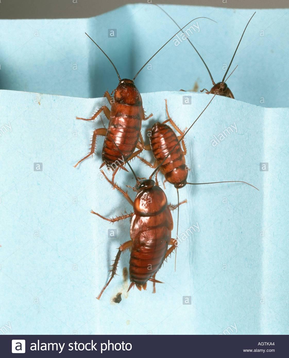 Откуда появляются тараканы в квартире и как с ними бороться?