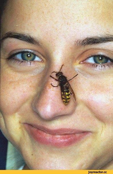 Особенности укуса осы