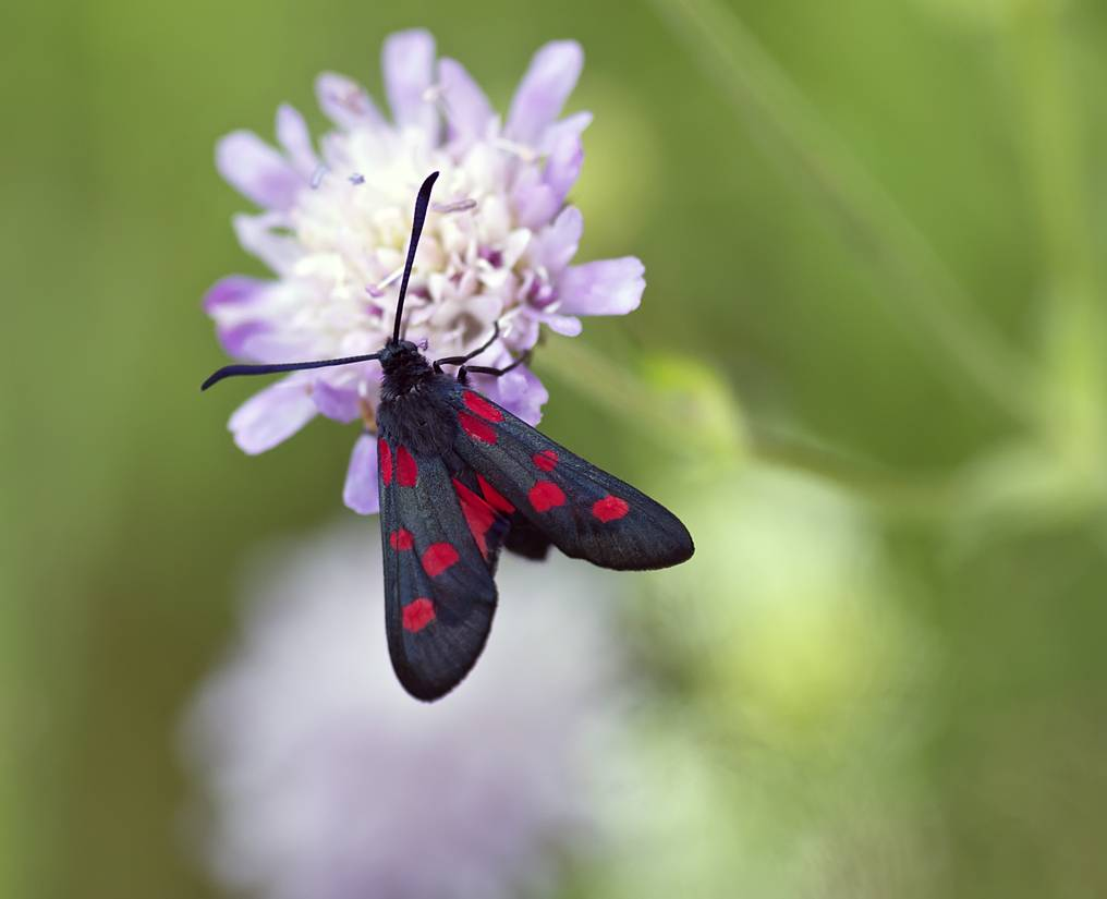 Как избавиться от бабочки совки