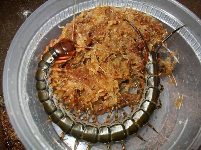Сороконожка в квартире — удалить за 7 шагов и применить инсектициды