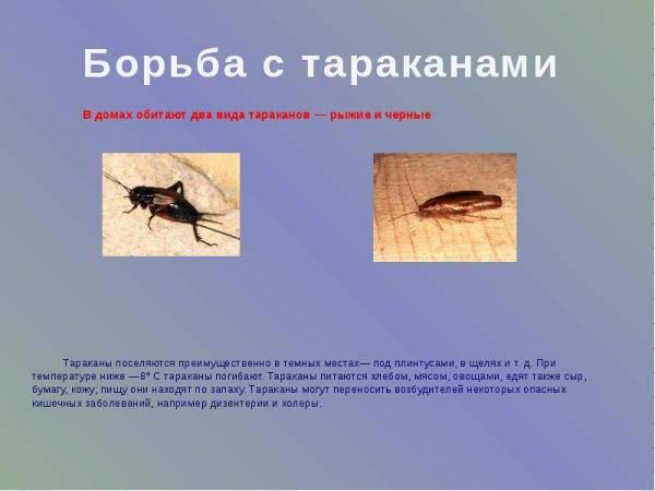Насекомые-энтомофаги. какие насекомые - помощники человека? насекомые-энтомофаги. какие насекомые - помощники человека?