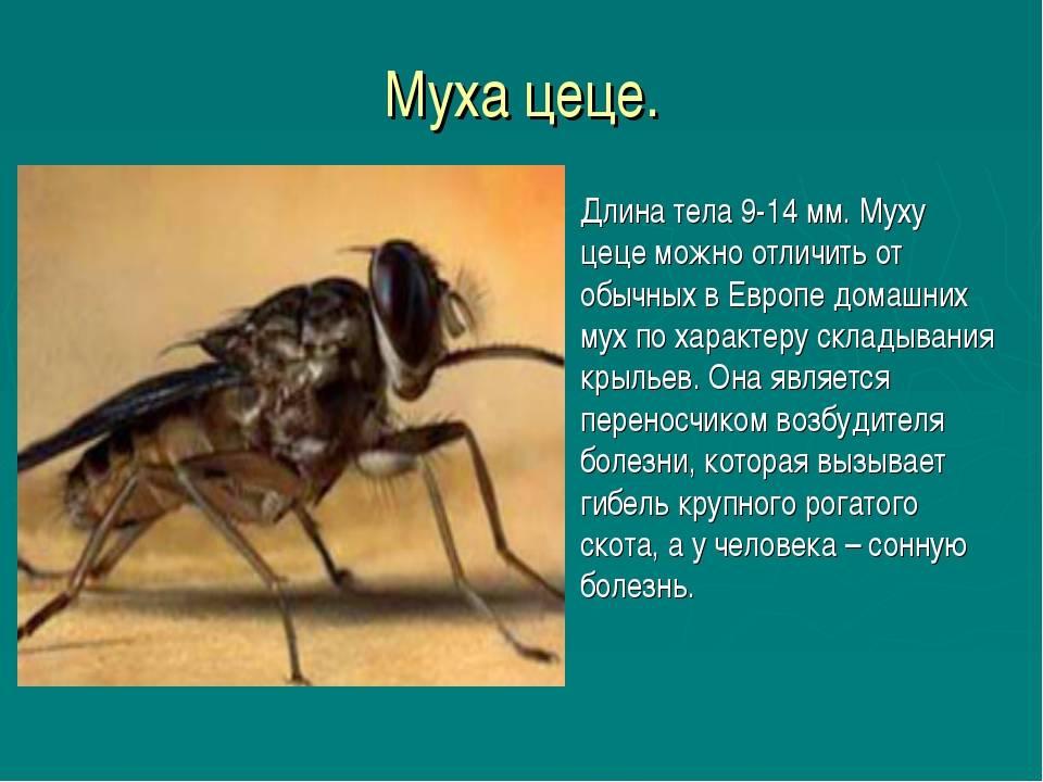 Африканский трипаносомоз человека (сонная болезнь)