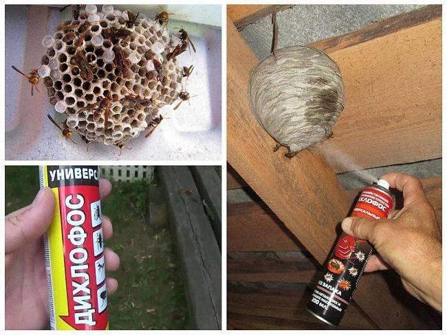 Осы в доме: как избавиться и найти гнездо, методы борьбы