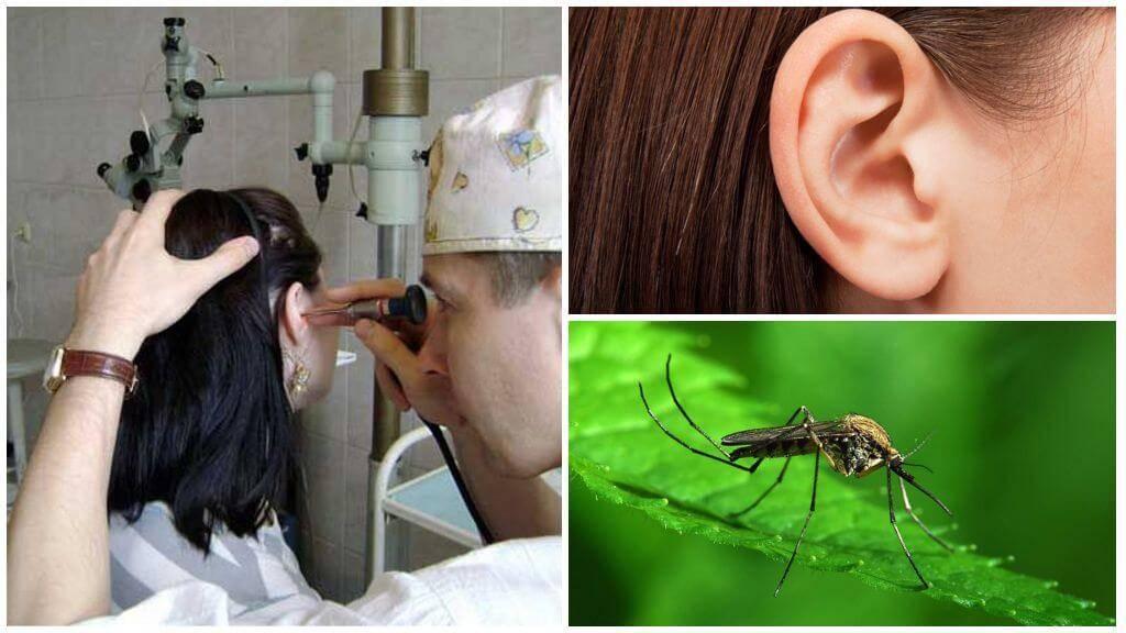 Что делать если насекомое попало в ухо (залетела мошка): как вытащить?