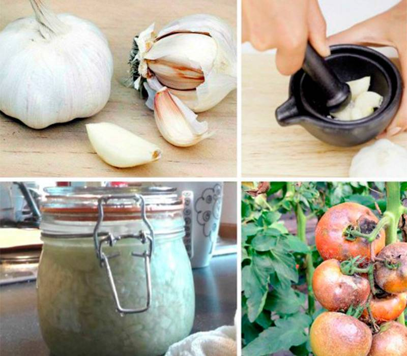 Горчица против тли: методы и рецепты растворов