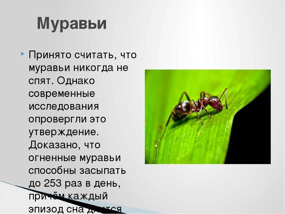 Спят ли муравьи