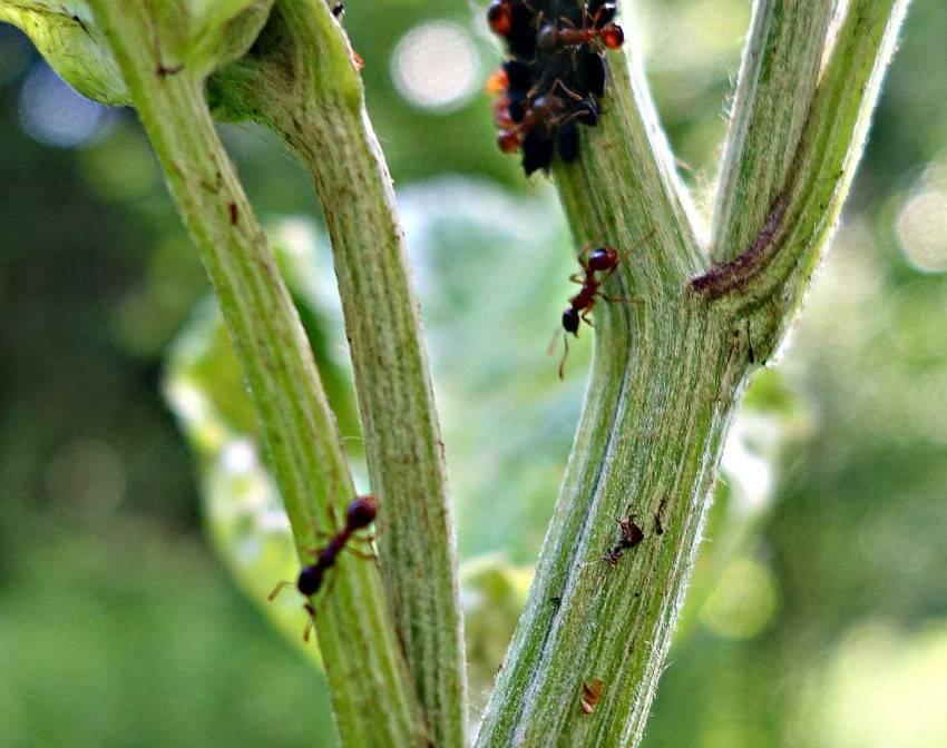 Как избавиться от муравьев на грядке с огурцами: что делать, методы борьбы