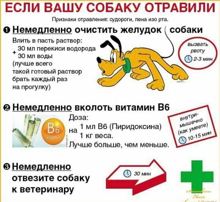 Отравления крысиным ядом человека: признаки, симптомы интоксикации, мышиной, отравы, яды, виды, помощь