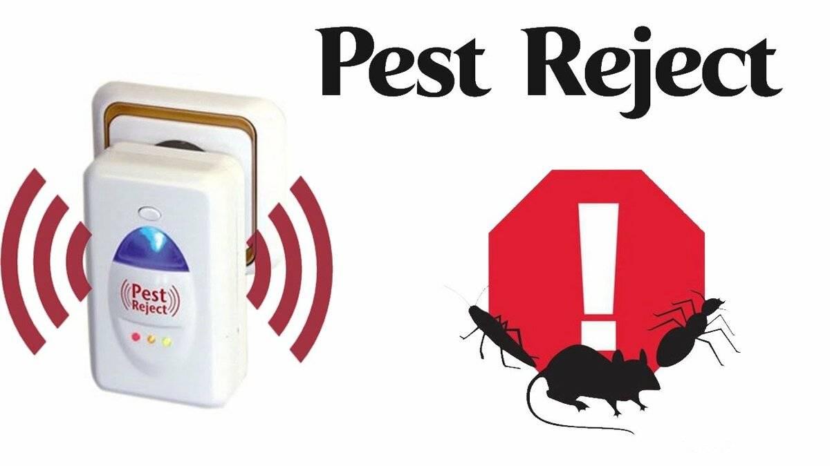 Все о «пест реджект»: что такое ультразвуковой отпугиватель грызунов и насекомых, как он работает, где купить?