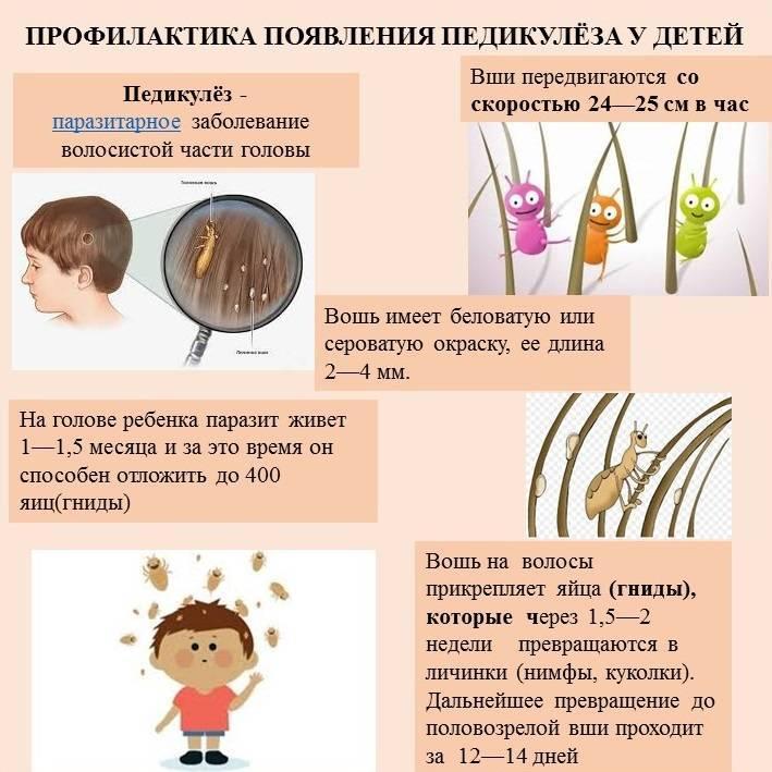 7 средств для профилактики вшей и гнид, у детей и взрослых