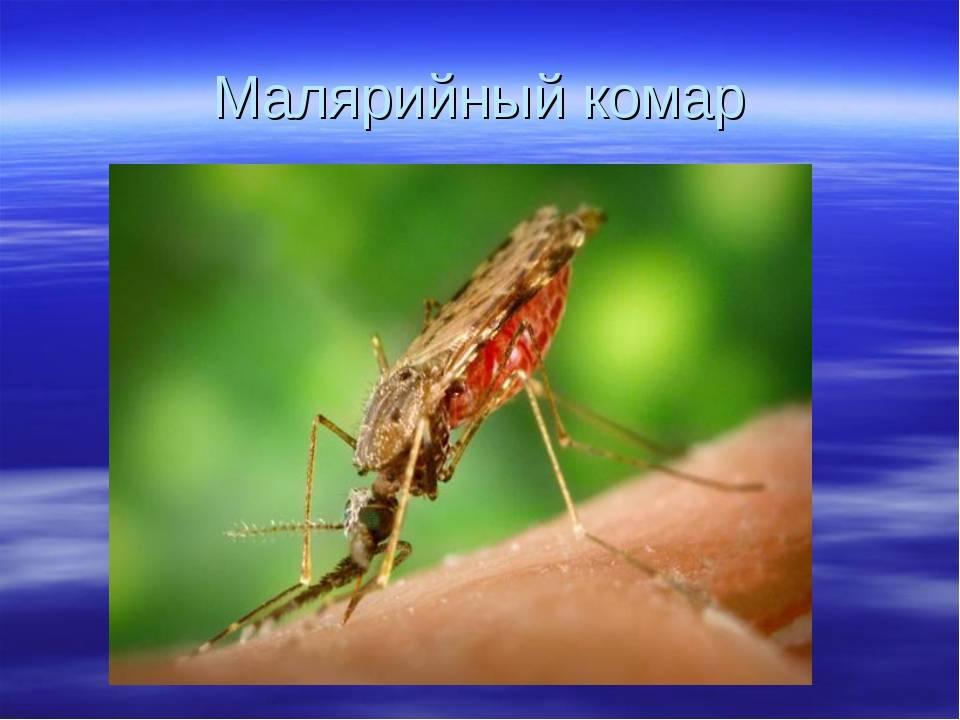 Комар: его повадки, виды, средства борьбы с ним, видео, фото
