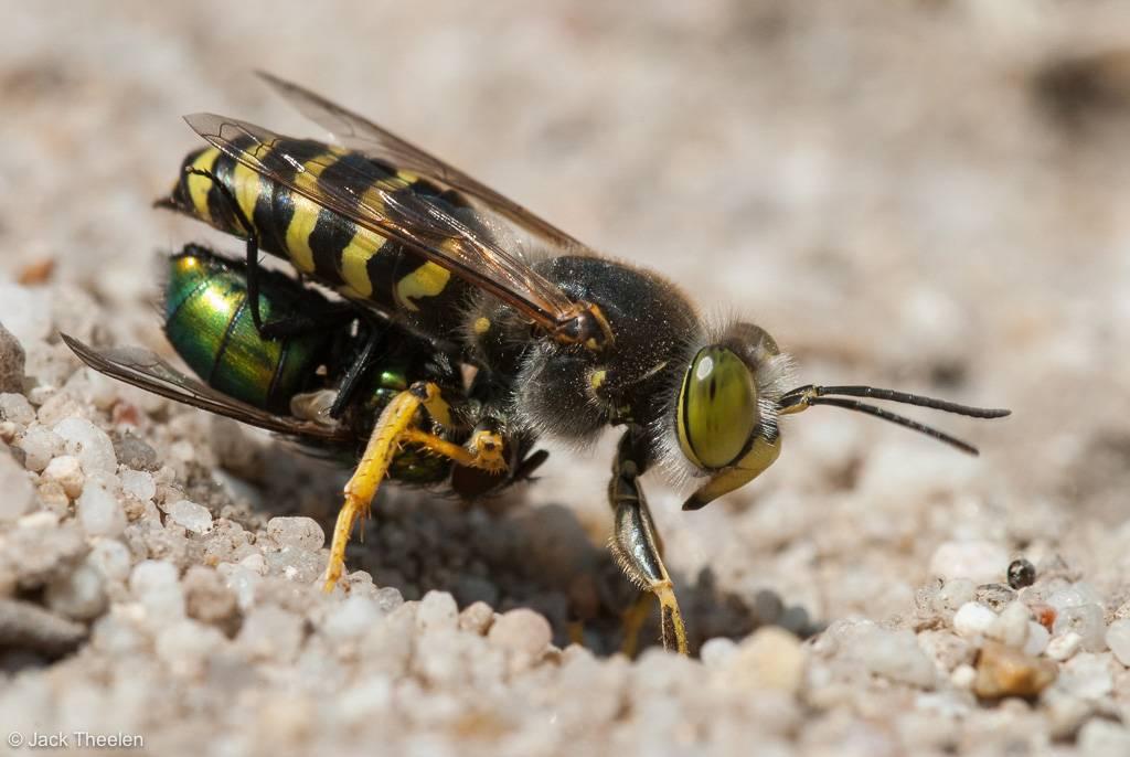 Зачем нужны мухи в природе