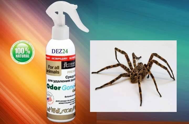 Как бороться и вывести пауков из квартиры и частного дома