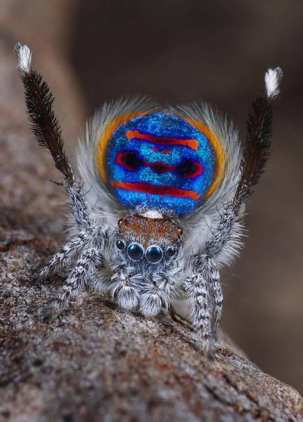 Самые красивые пауки – ужасные и прекрасные