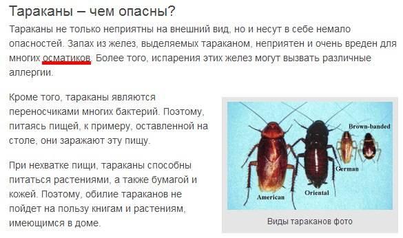 «самостоятельную травлю тараканов дома нельзя проводить профессиональными средствами»: эксперт по дезинсекции (интервью) – новости владивостока на vl.ru