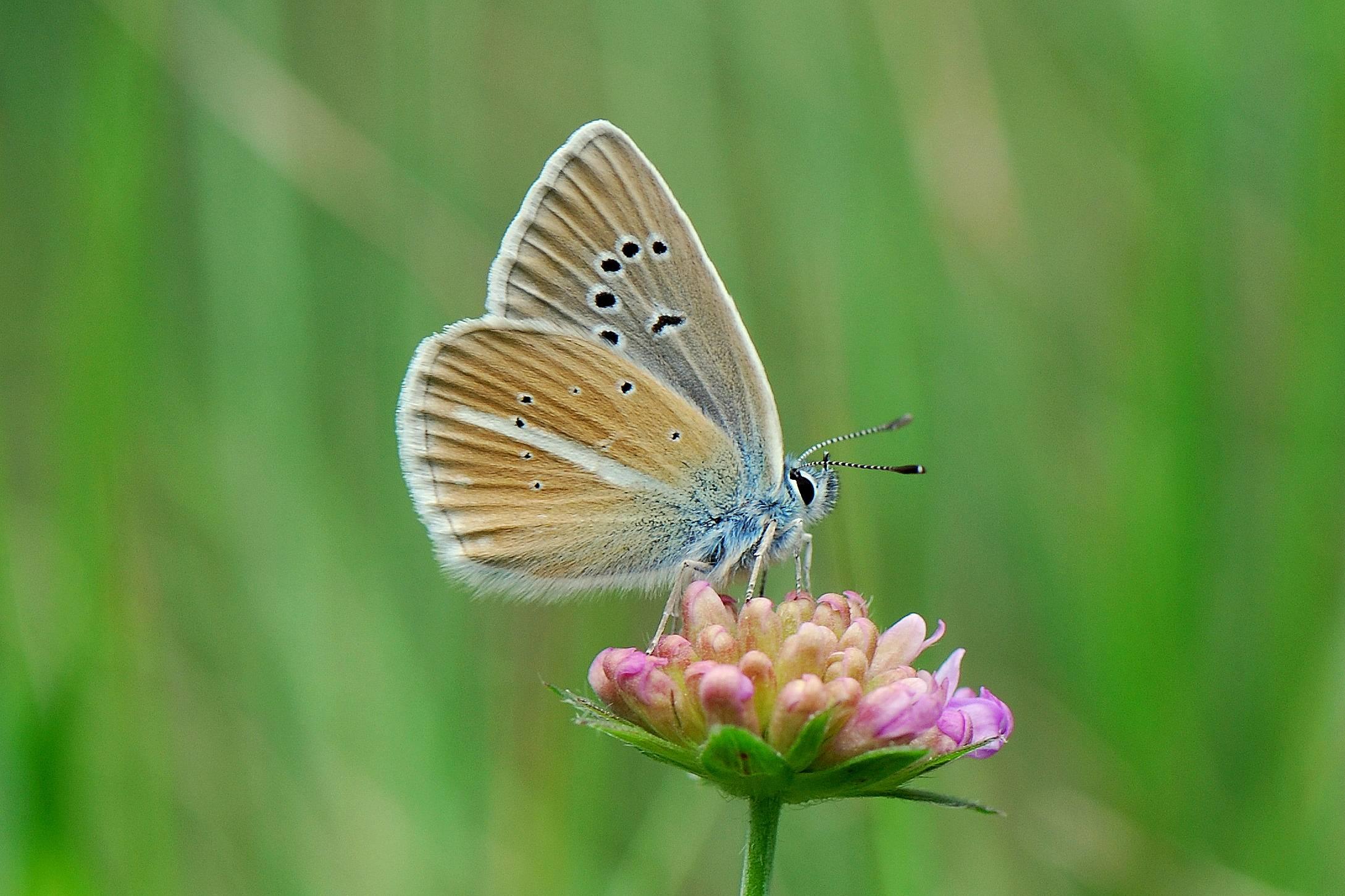 Фоторепортаж насекомые подмосковья часть 1 бабочки