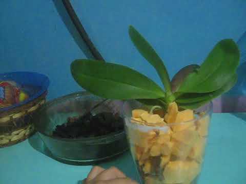 Как избавиться от мелких мошек на орхидее