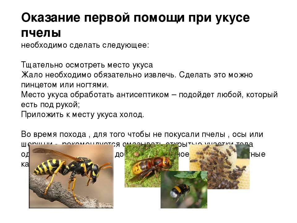Что делать, если укусила пчела, как снять отек и покраснение?