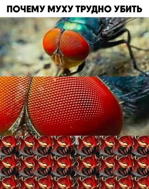 Как убить муху? средства от мух в квартире :: syl.ru