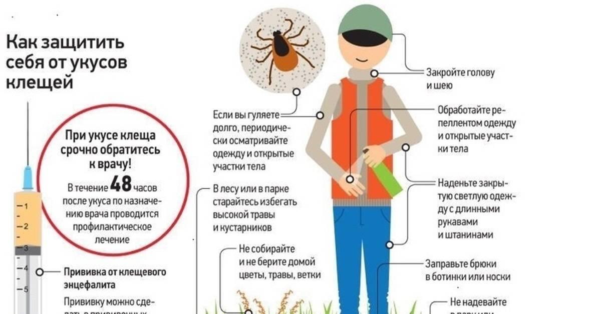 Как защититься от клещей — на даче, на природе и в лесу
