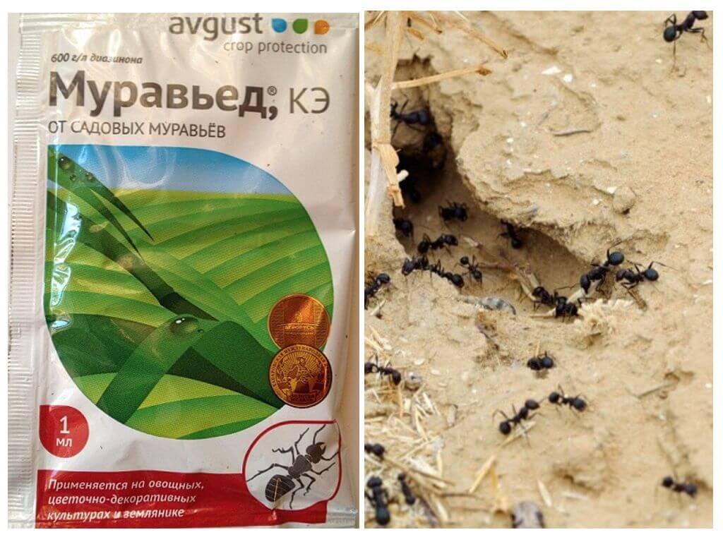 Средство муравьед от муравьев: инструкция, отзывы, принцип действия, эффективность