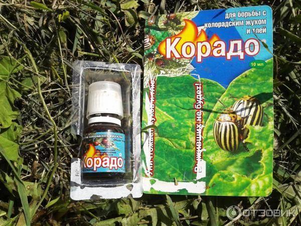 Популярный инсектицид корадо: инструкция по применению, преимущества, отзывы