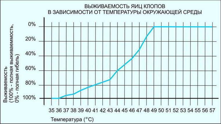 При какой температуре погибают клопы и их яйца: боятся ли они мороза, дохнут ли от пара и кипятка русский фермер
