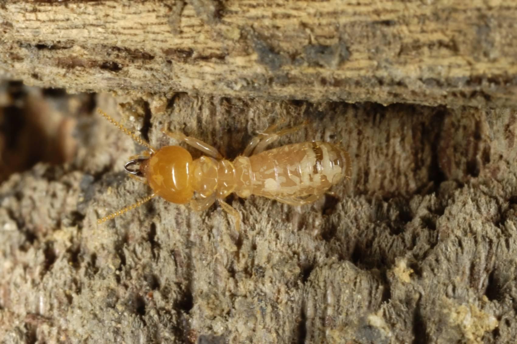 Муравьи и термиты