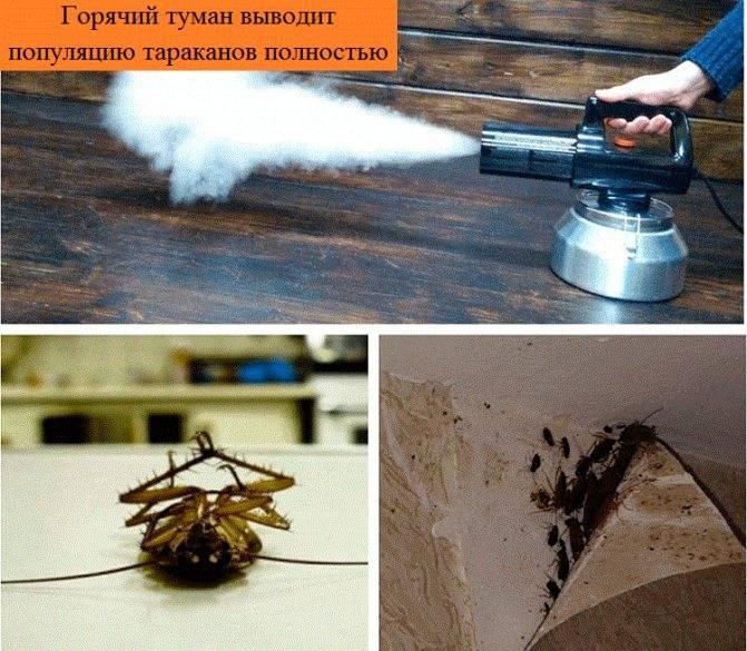 Горячий туман от тараканов: как проходит дезинфекция и как правильно обрабатывать?