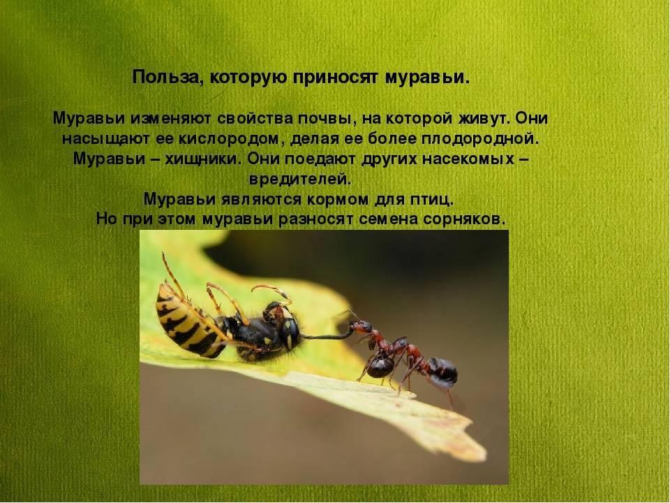 Садовые муравьи: чем полезны и возможный вред | польза и вред