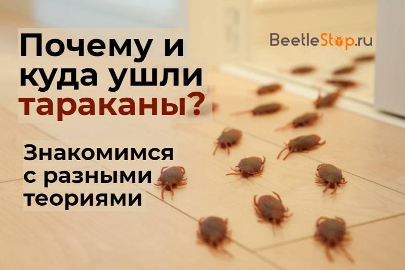 Что будет если исчезнут тараканы и куда они делись из квартир