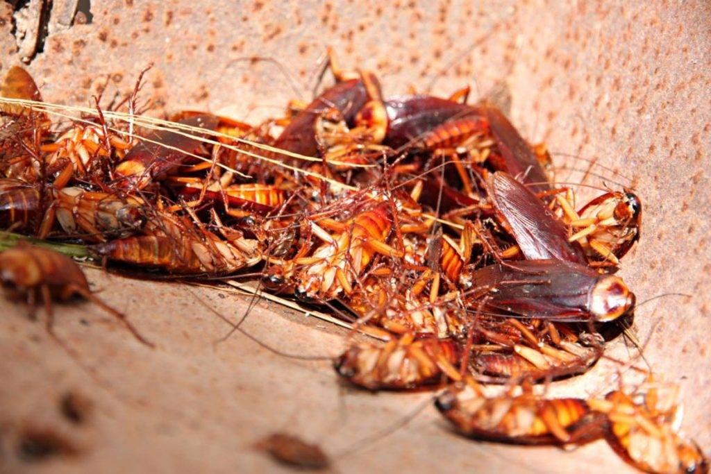 Почему в квартирах исчезли тараканы и может ли это быть тревожным сигналом