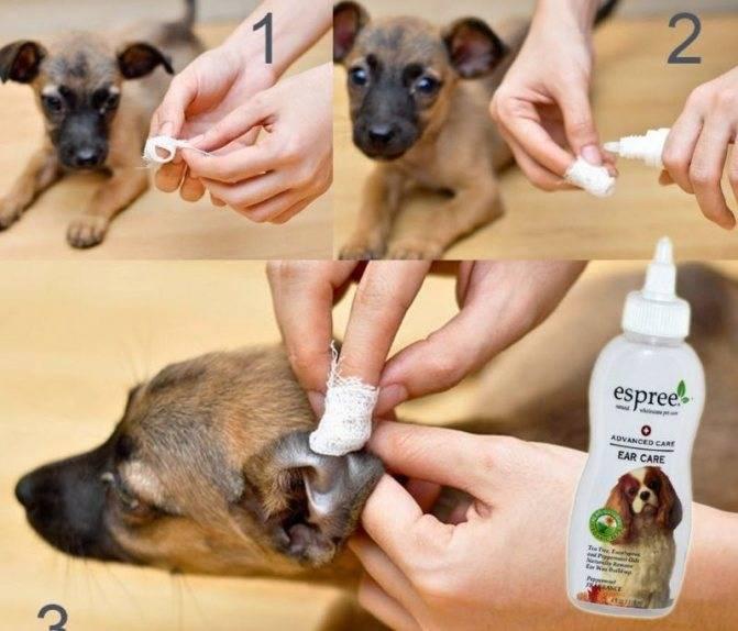 Способы защиты собаки от мух