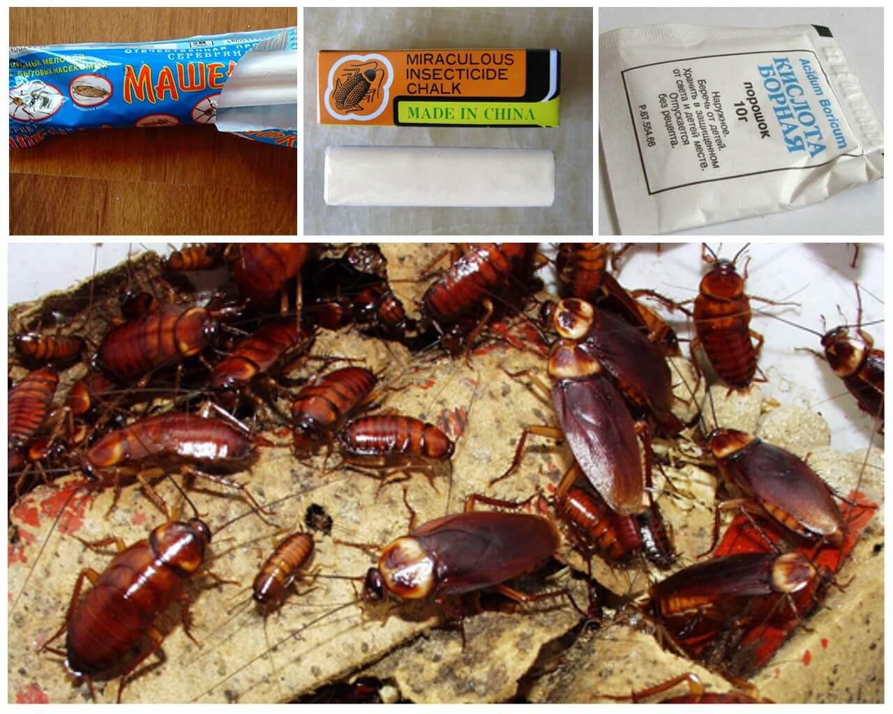 Как быстро вывести тараканов из квартиры навсегда, чем вытравить: народные средства
