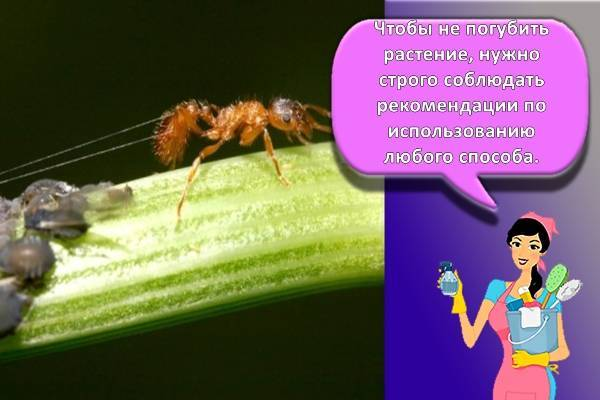 Избавиться от муравьев на цветах: вывести насекомых в цветочных горшках