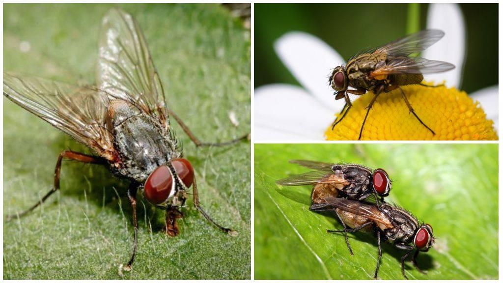 Я люблю вас... мухи!