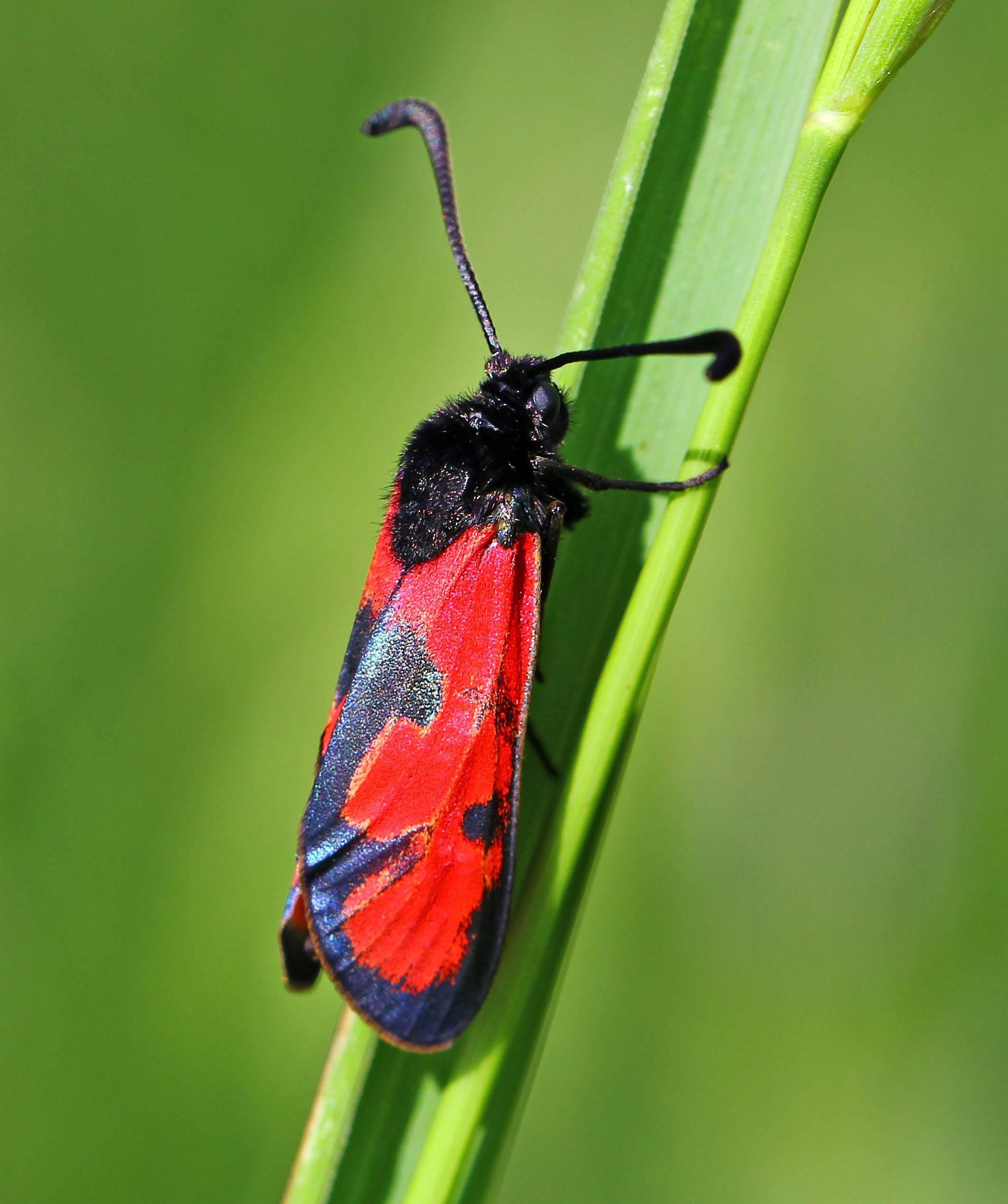 Американская белая бабочка: карантинный вредитель - способы борьбы