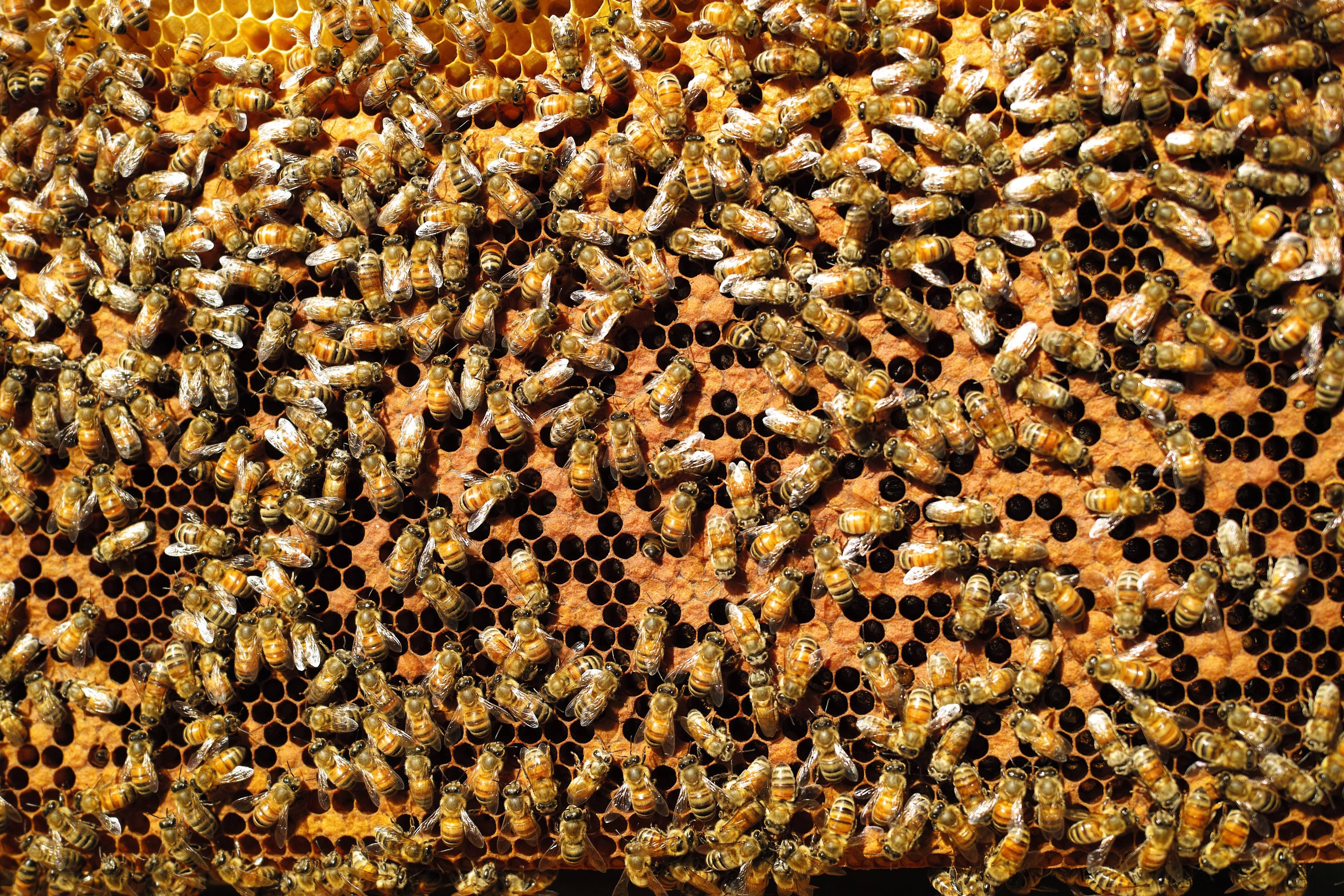 Что будет, если исчезнут пчелы: последствия для человечества