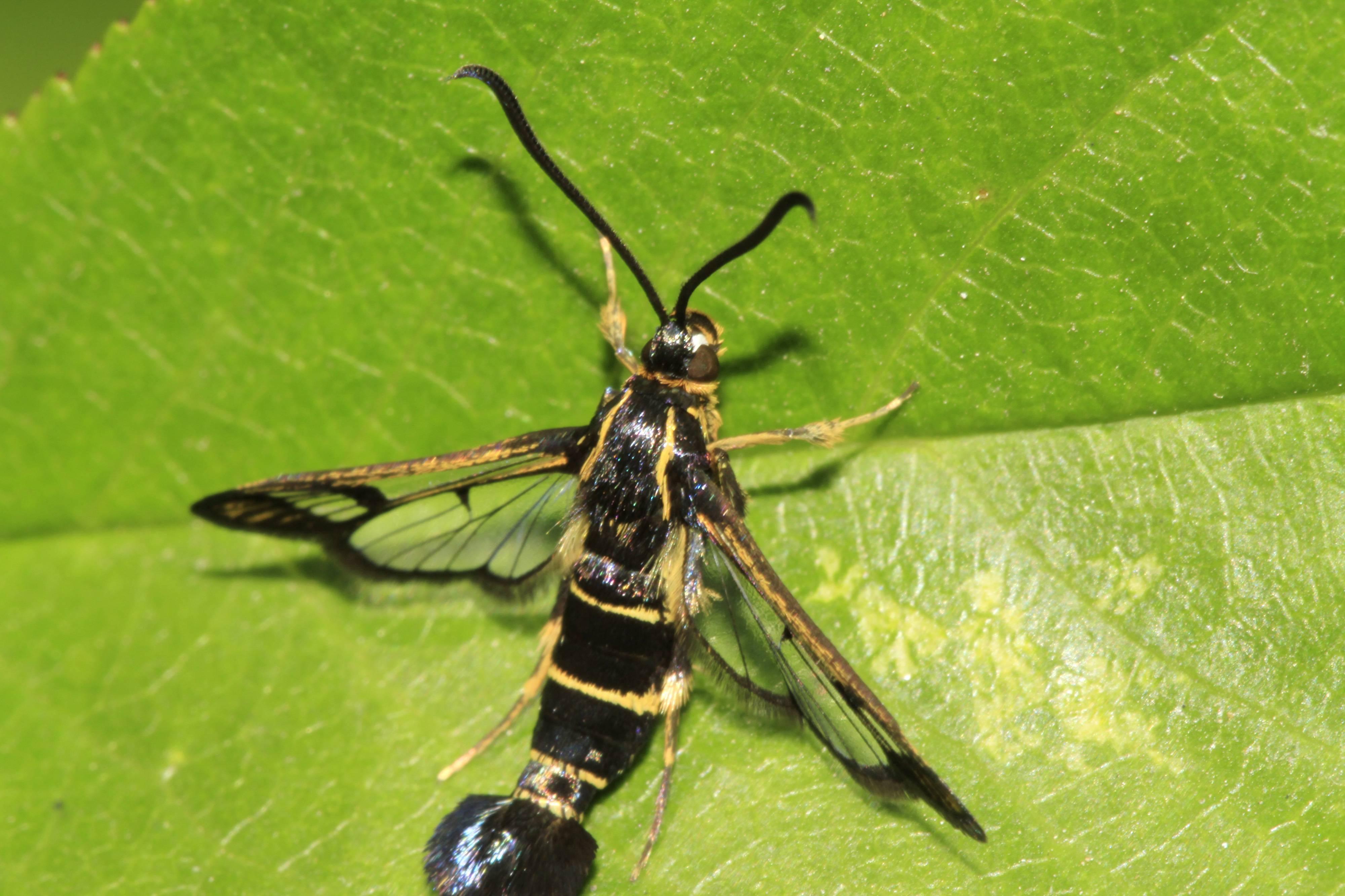 Гусеницы на смородине: как бороться, если полностью съедают листья, способы избавиться