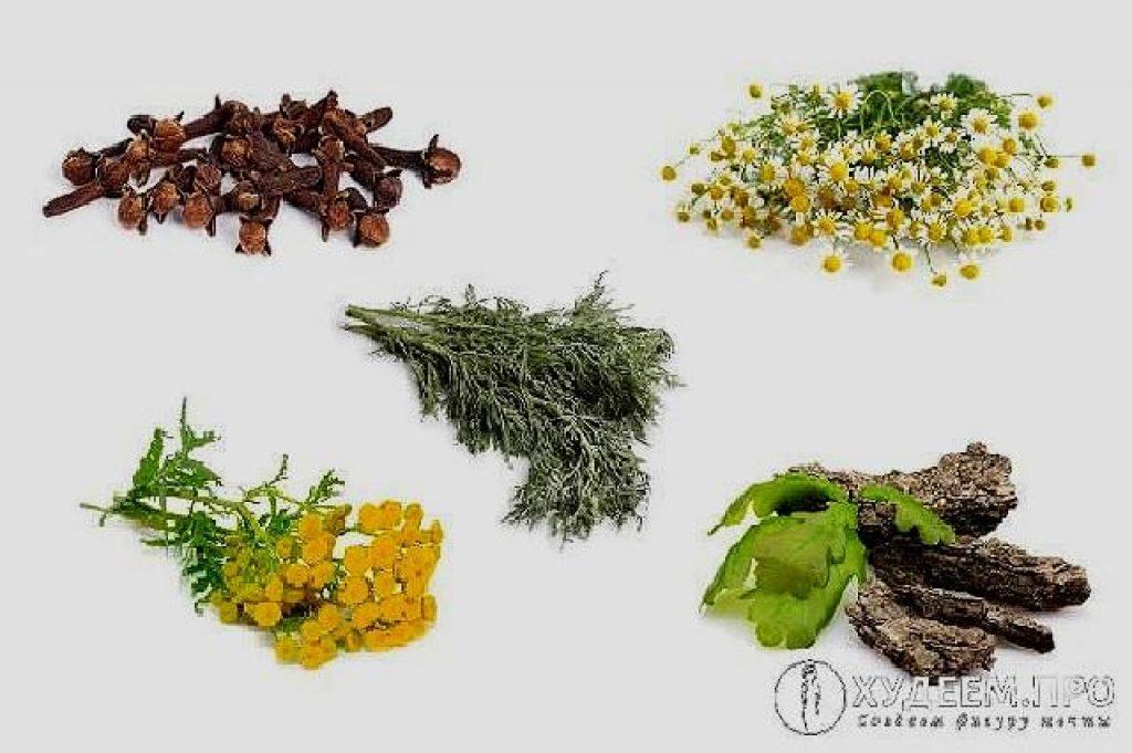 Какие травы сильнее отпугивают блох, как и в сочетании с чем их применять?
