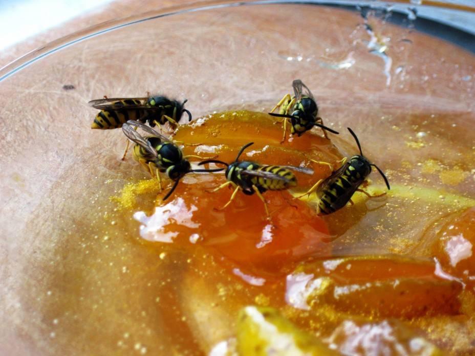 Производят ли осы мед