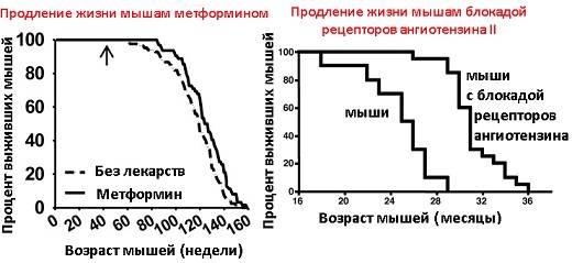Сколько живут крысы? продолжительность жизни домашних питомцев, срок существования в условиях дикой природы