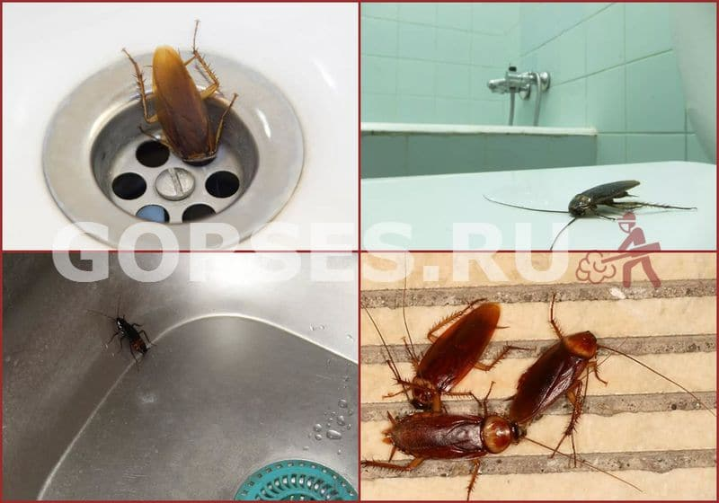 Как выглядят маленькие тараканы и чем они отличаются от обычных?