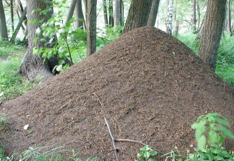 Сон о муравейнике растолкуют популярные сонники